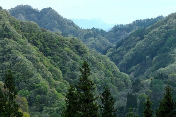 長野の新緑