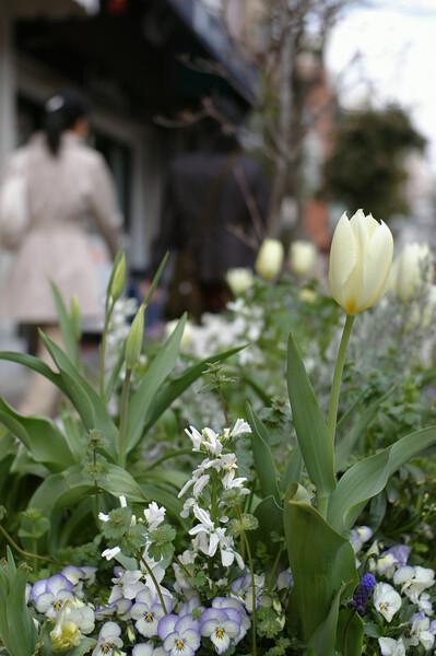 【緑】花とコートと街並みと