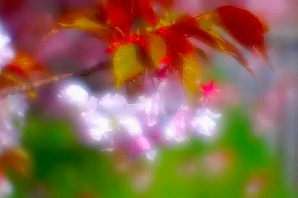 【この色 好き!】春の花 桜#3
