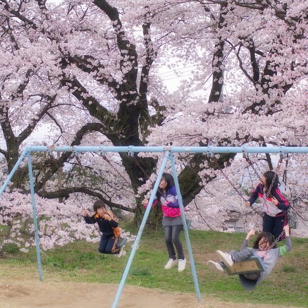 【スクエア】sakuraとブランコ
