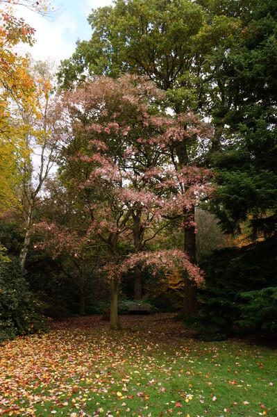 春【色】のような秋【色】