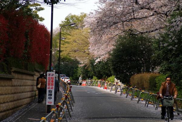 『道』お花見裏街道