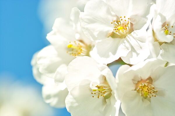 【おだやかに・・・・春】お花たち楽しそう