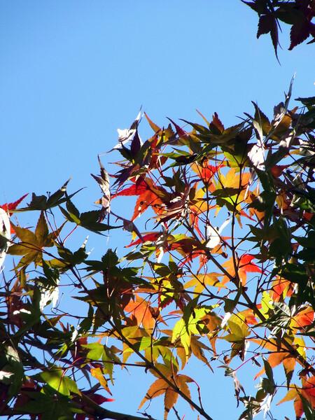 密かに【紅】葉