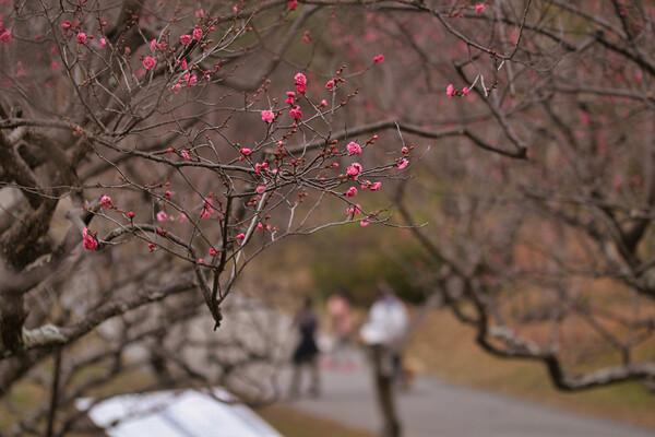 公園に早春の訪れ