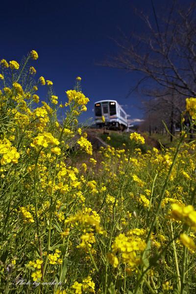春爛漫列車