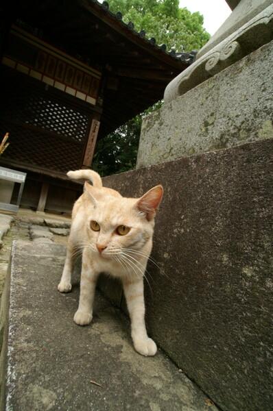 猫VSレンズ
