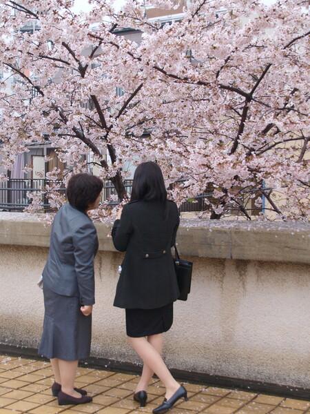 【桜】入学式