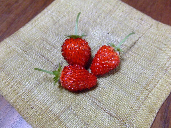 祝★収穫〜♪