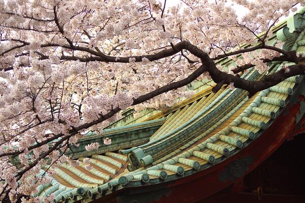 上野・寛永寺