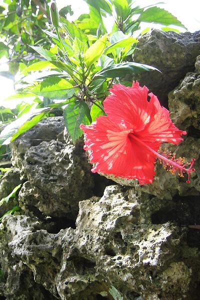 【赤い花】^^