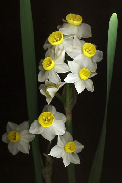 しおれかけの花(SCAN)