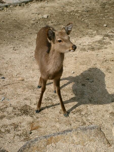【やすらぎ】小鹿