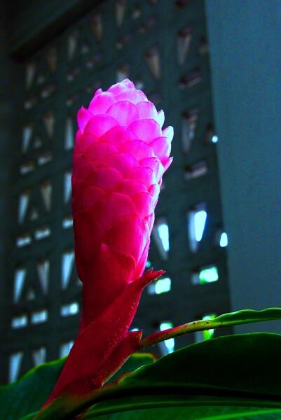☆ 南国の花 ☆