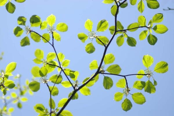 ブルー&グリーン(この木なんの木?)