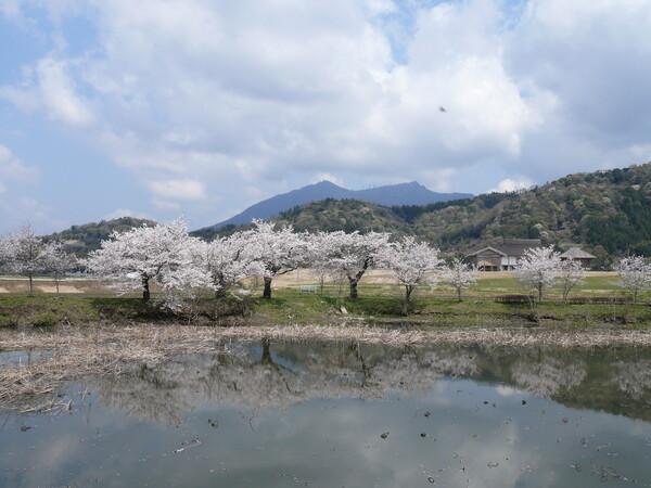 筑波山と桜・・・