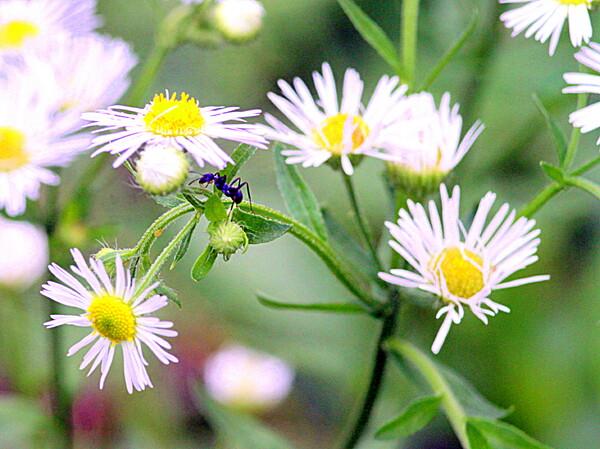 【小さい】花と蟻