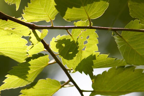 【植】葉っぱに潜むもの