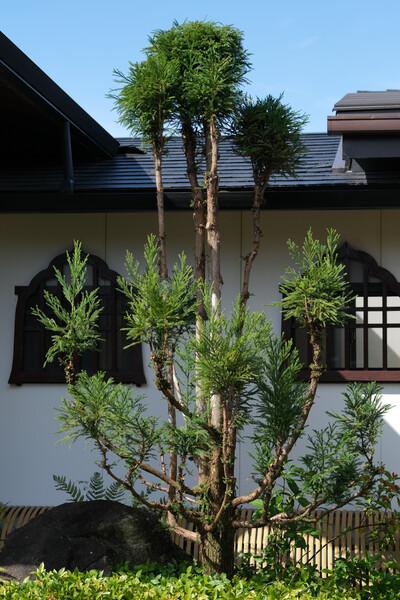 台杉のある寺
