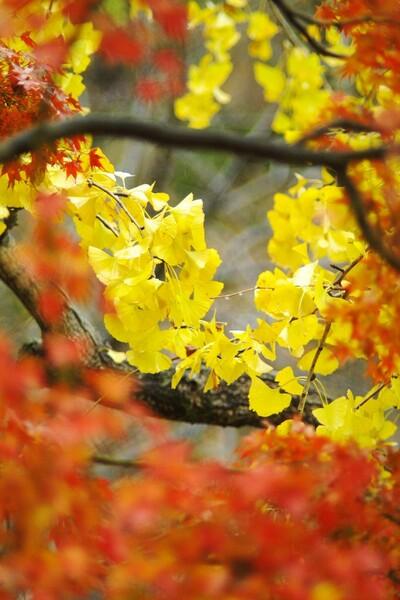 【木】秋味