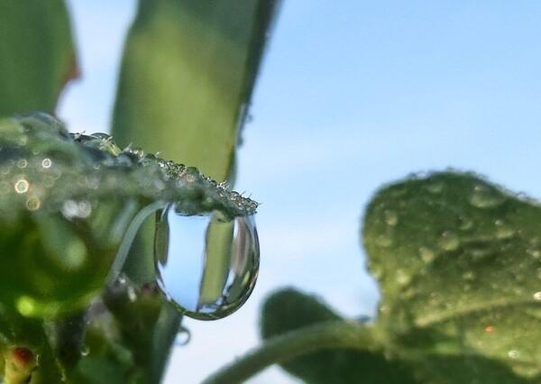 水滴の撮影にはまって・・・