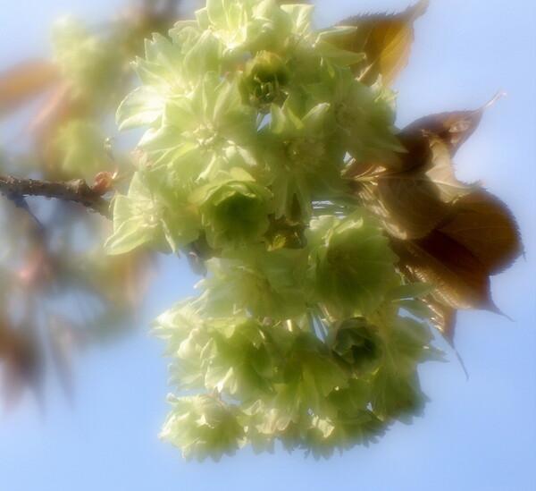【この色 好き!】春の花#12