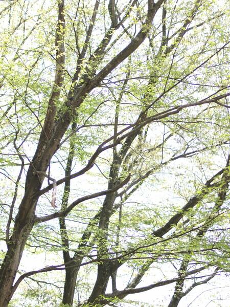 【淡彩】春のひかり