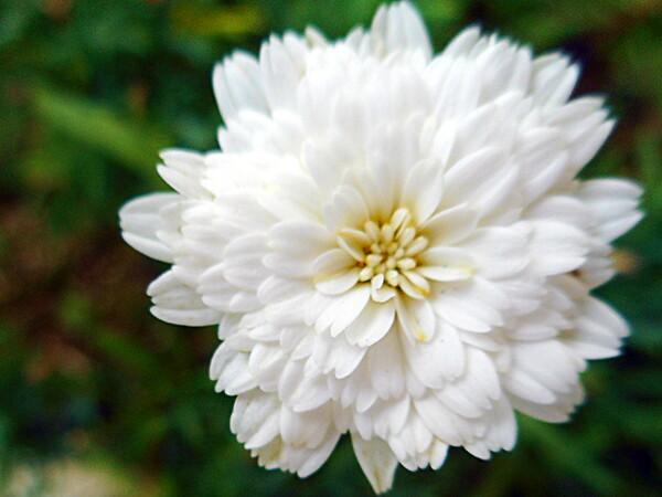 テスト4 白い花