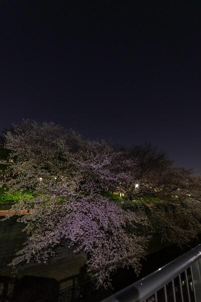桜の上のオリオン