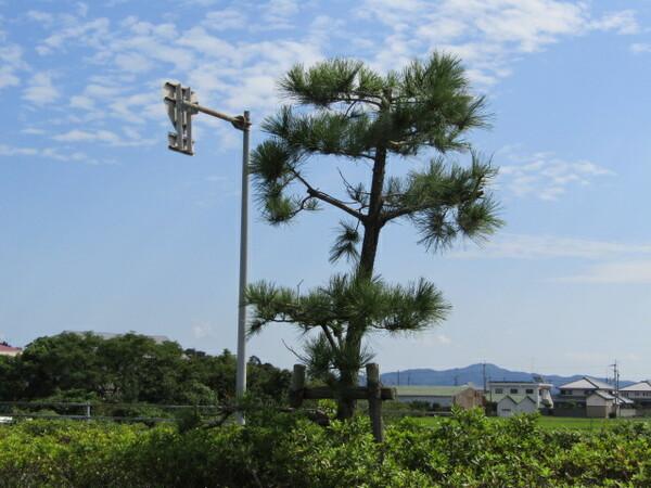青空&松の木 力を合わせて 荒らし退治