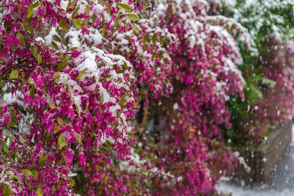 凍える花びら4