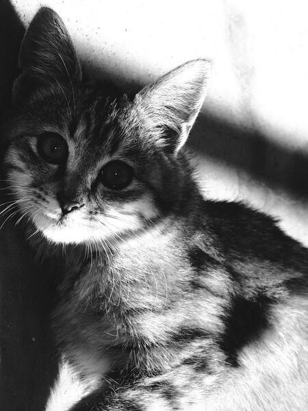 美【猫】おとら