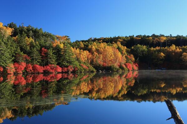 秋を撮りに Ⅱ