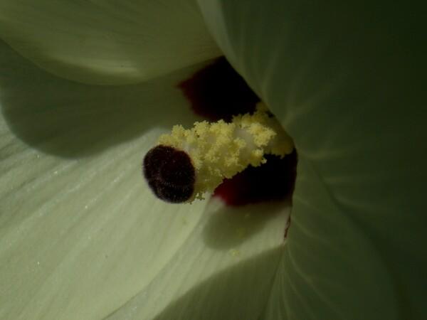 わたしは何の花でしょう