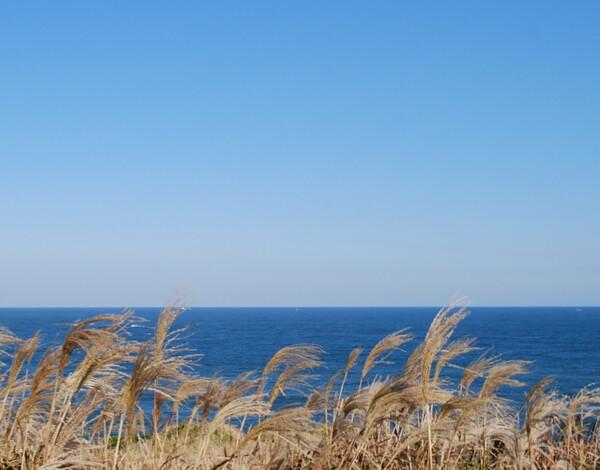【秋】すすきと海