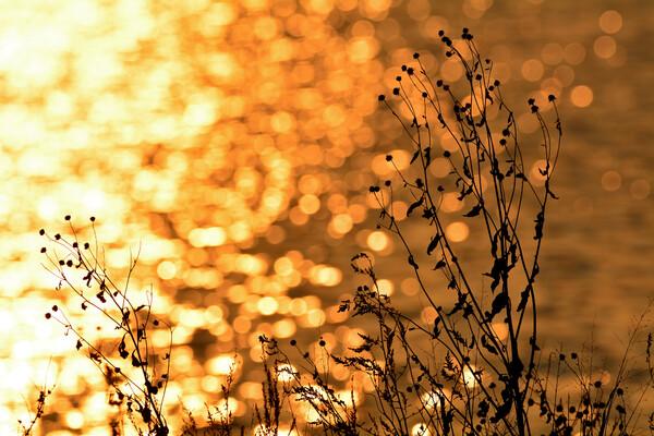 夕暮れの枯れ草