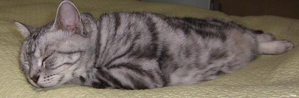 【猫】寝姿