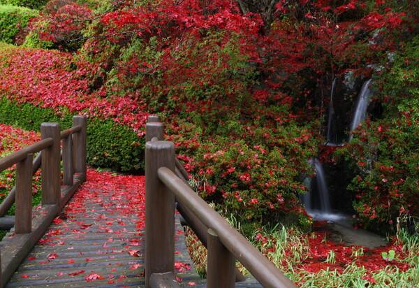 ゆく秋を 染めしながめの 満願寺