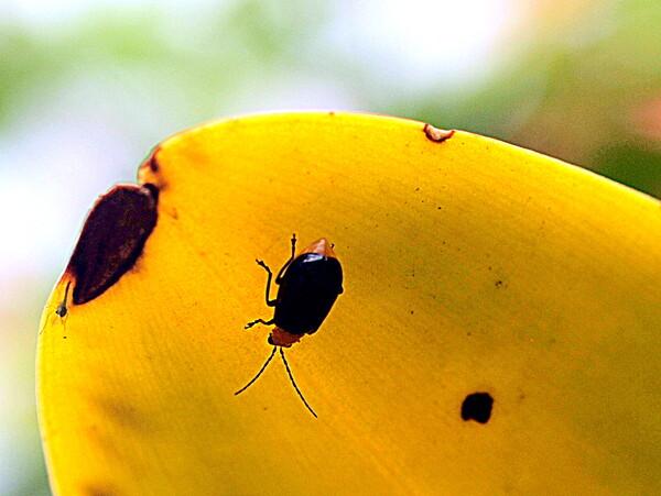 【生き物景色】小さな虫