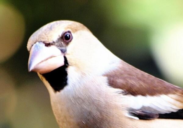 鳥の【横顔】UP 2
