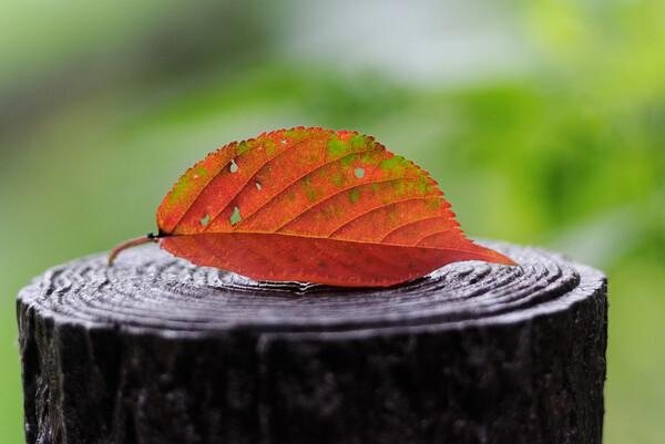 【燃】 萌え〜〜な秋のヨ、カ、ン
