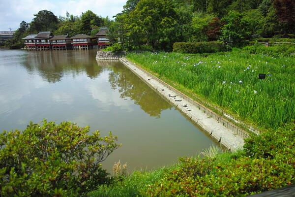 長岡天満宮の池の畔です。
