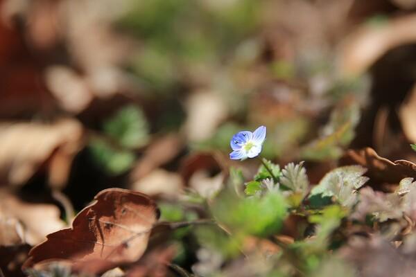 春のごあいさつ