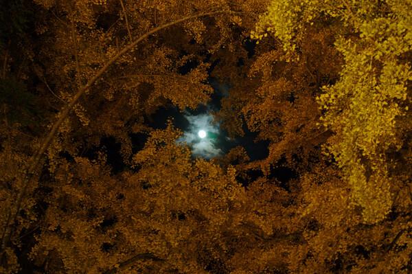 【ノスタルジー】月と木