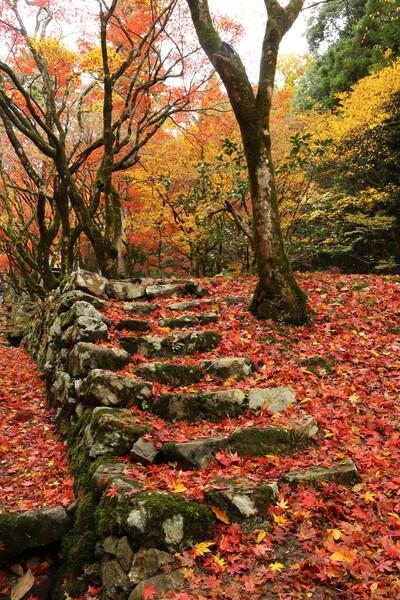 モミジ階段
