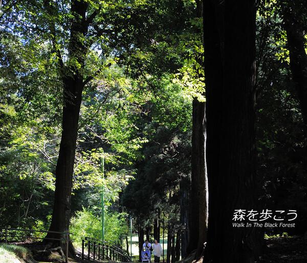 【リクエスト】森を歩こう〜Walk In The Black Forest