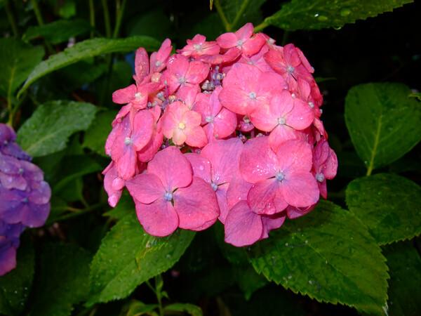 雨に似合う花・・・