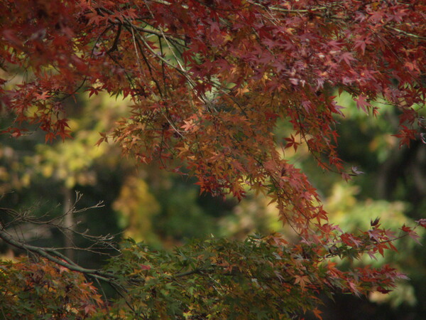 S公園の紅葉