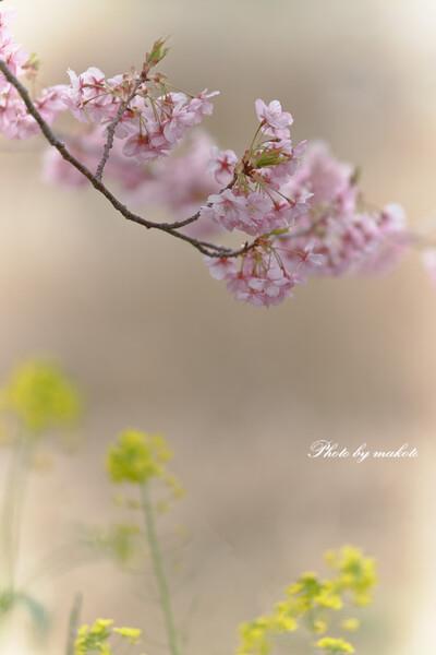 語りかける春