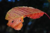 晩秋の紅葉②